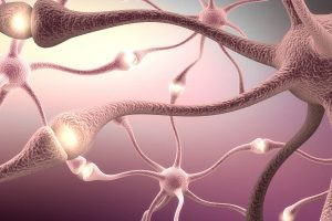 How Do Brain Supplements Boost the Overall Functioning of the Brain