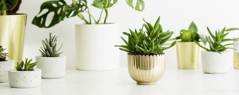 The Best Ways To Keep Your Plants Hydrated